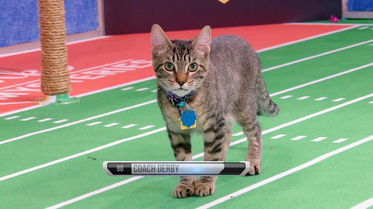 Cat Lete Of The Week Coach Derby Kitten Bowl V