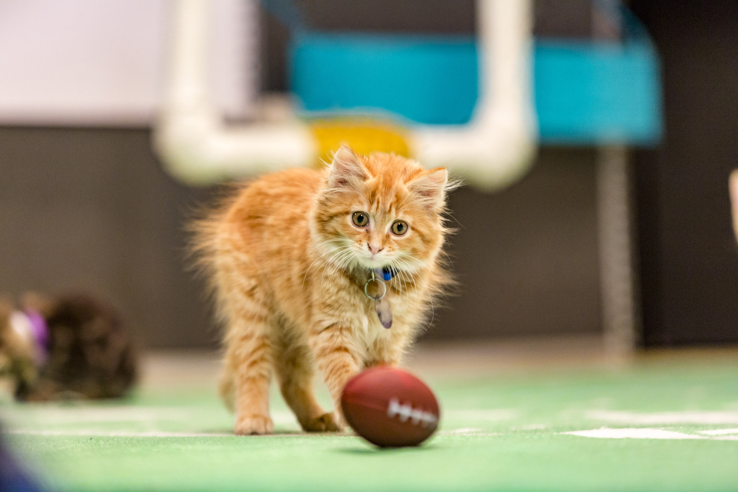 Kitten Bowl Iii Photo Gallery 2