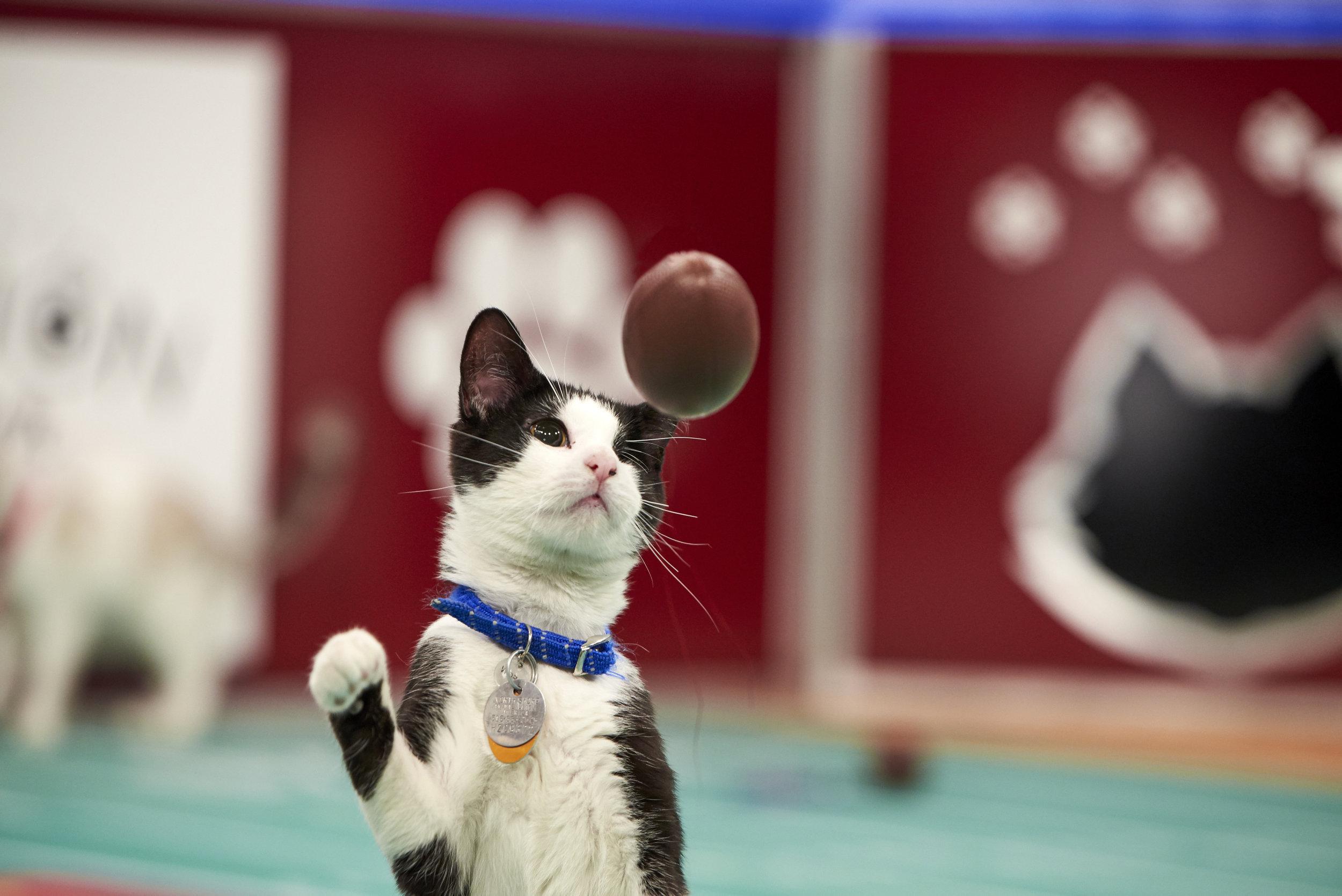 Kitten Bowl Vii The Latest News
