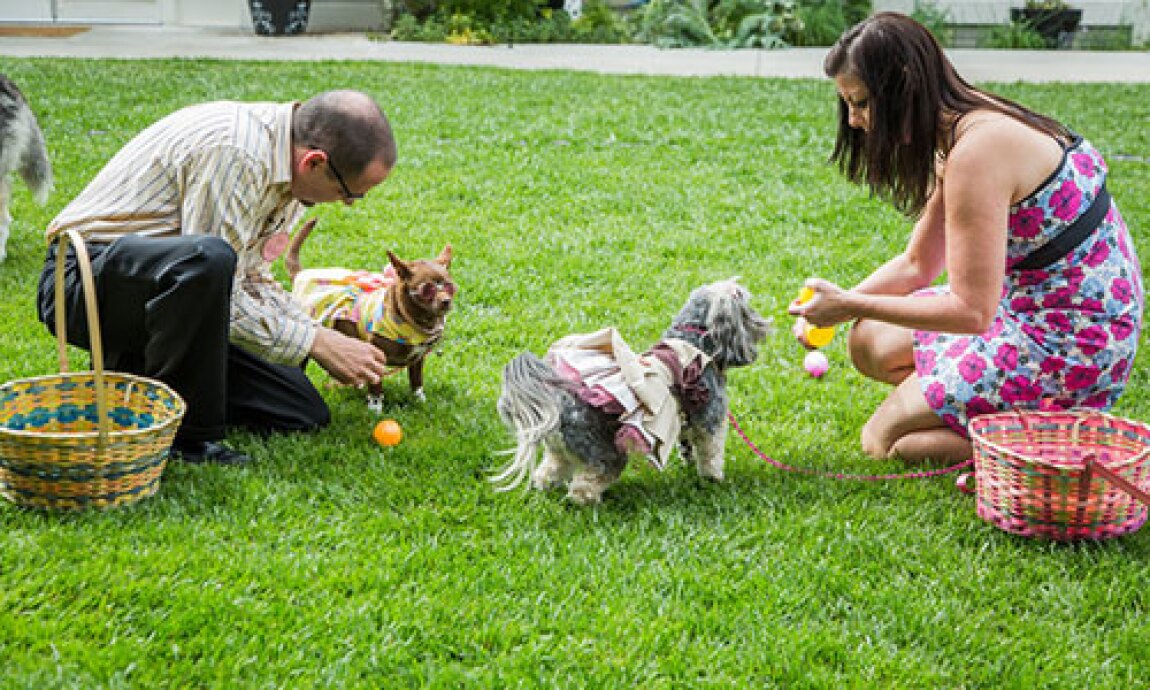Throw Your Own Doggie Easter Egg Hunt with Laura Nativo!