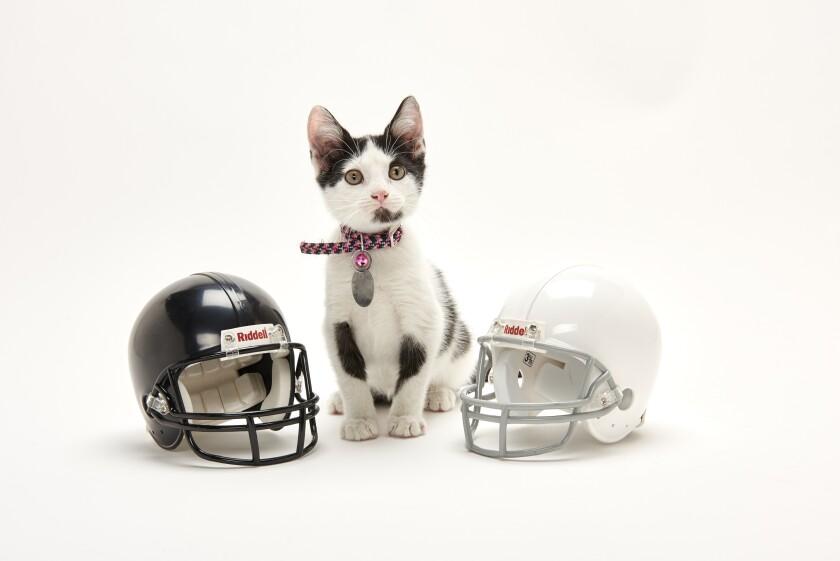 Kitten Bowl Football - 9