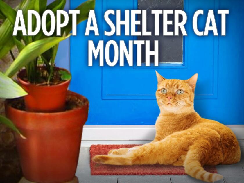 060116_adopt_a_shelter_cat_month.jpeg
