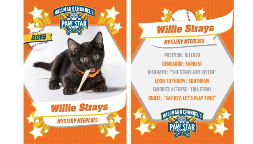 paw-star-willie-strays-2015