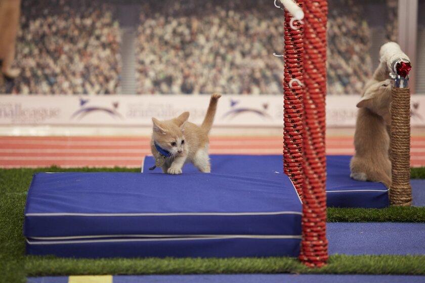 KittenSummerGames_0006.jpg
