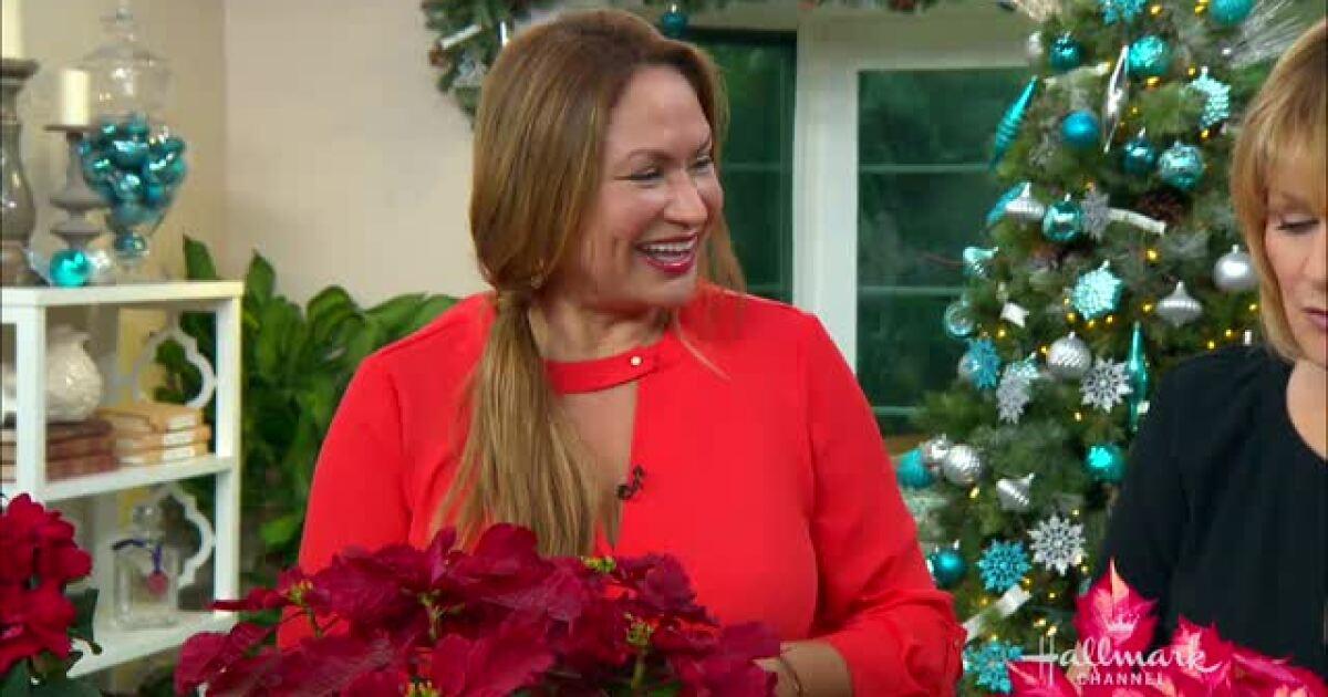 Shirley Bovshow S Poinsettia 101 Video Home Family