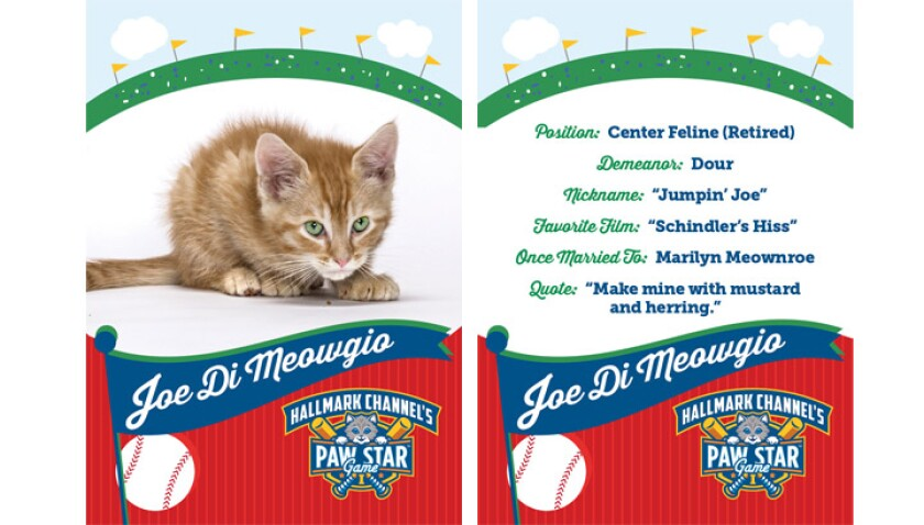 paw-star-joe-di-meowgio-2015