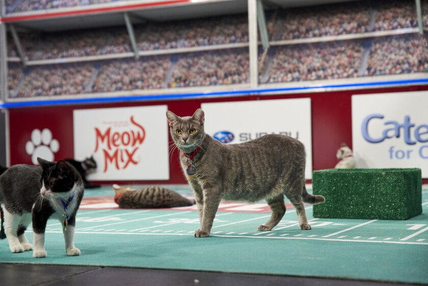 Photos from Cat Bowl - 7
