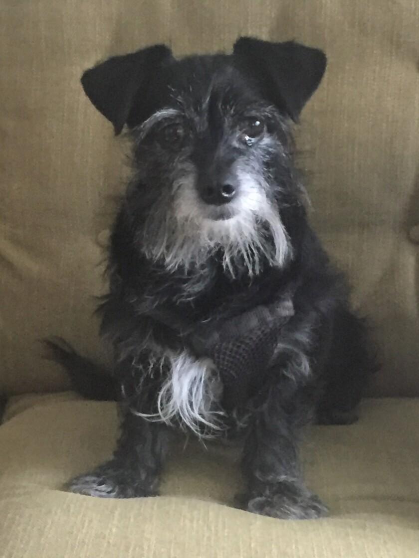 Missy - Senior Dog Category