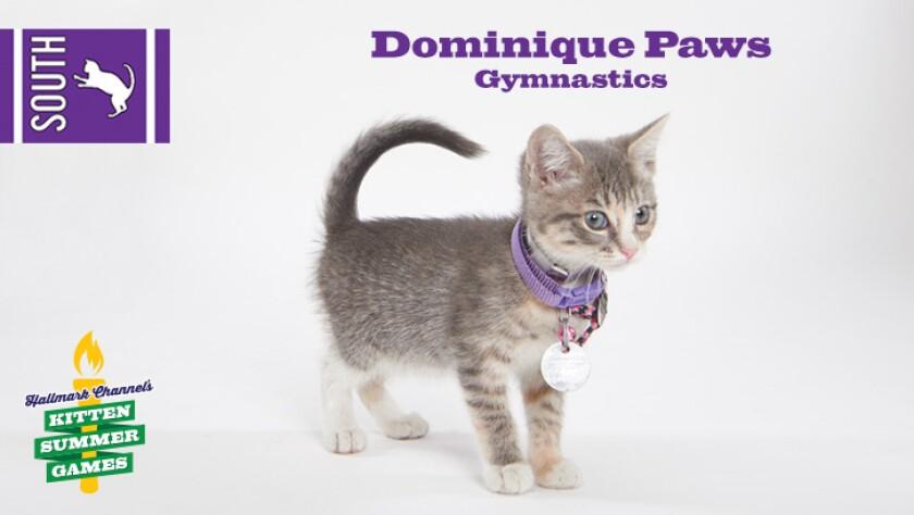 KittenSummerGames_726x410_DominiquePaws.jpg