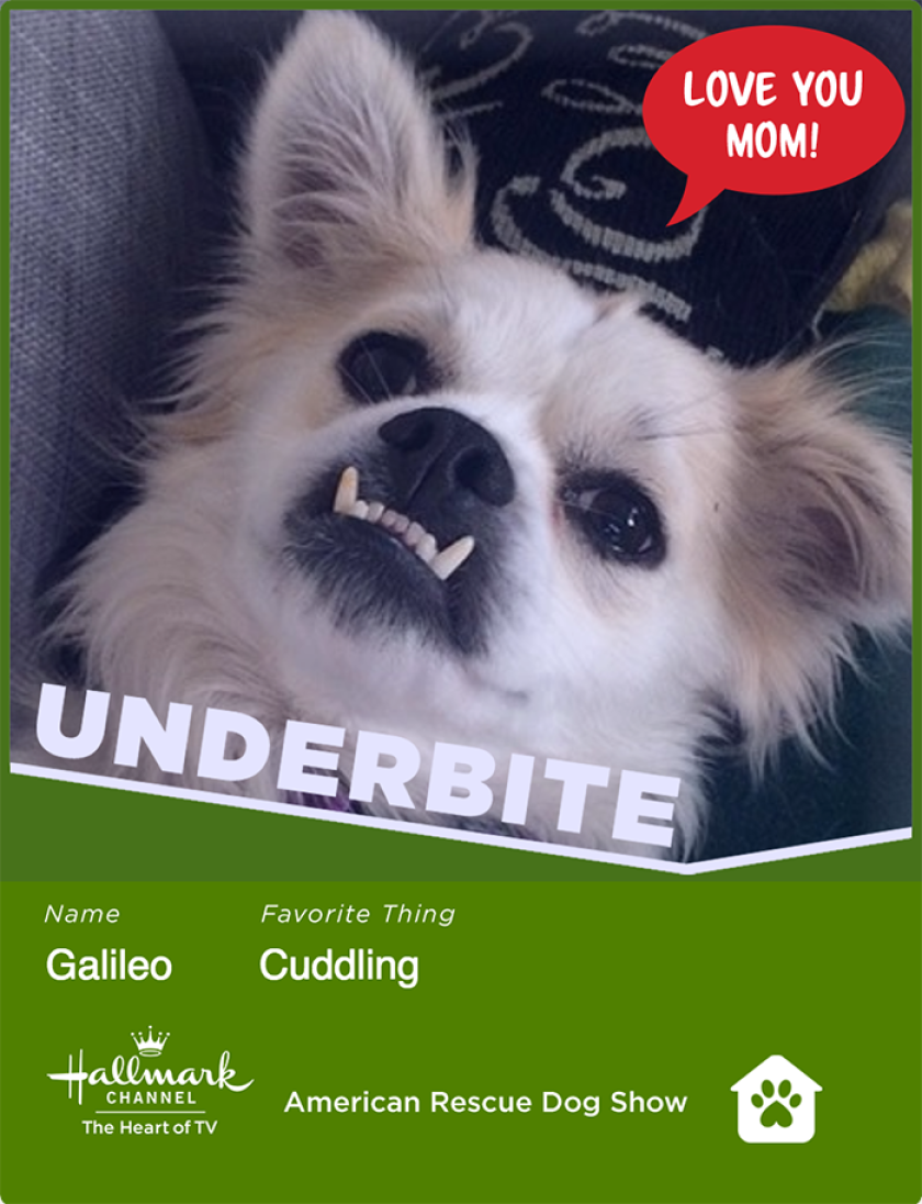 galileo-underbite.png