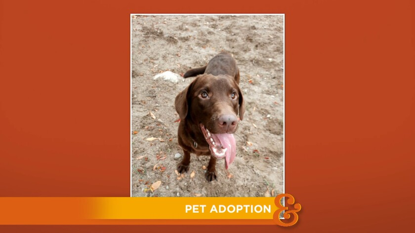 HF_9016_Pet_Adoption.jpg