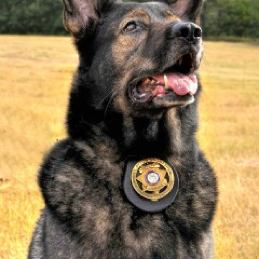Law Enforcement/Arson Dogs: Category