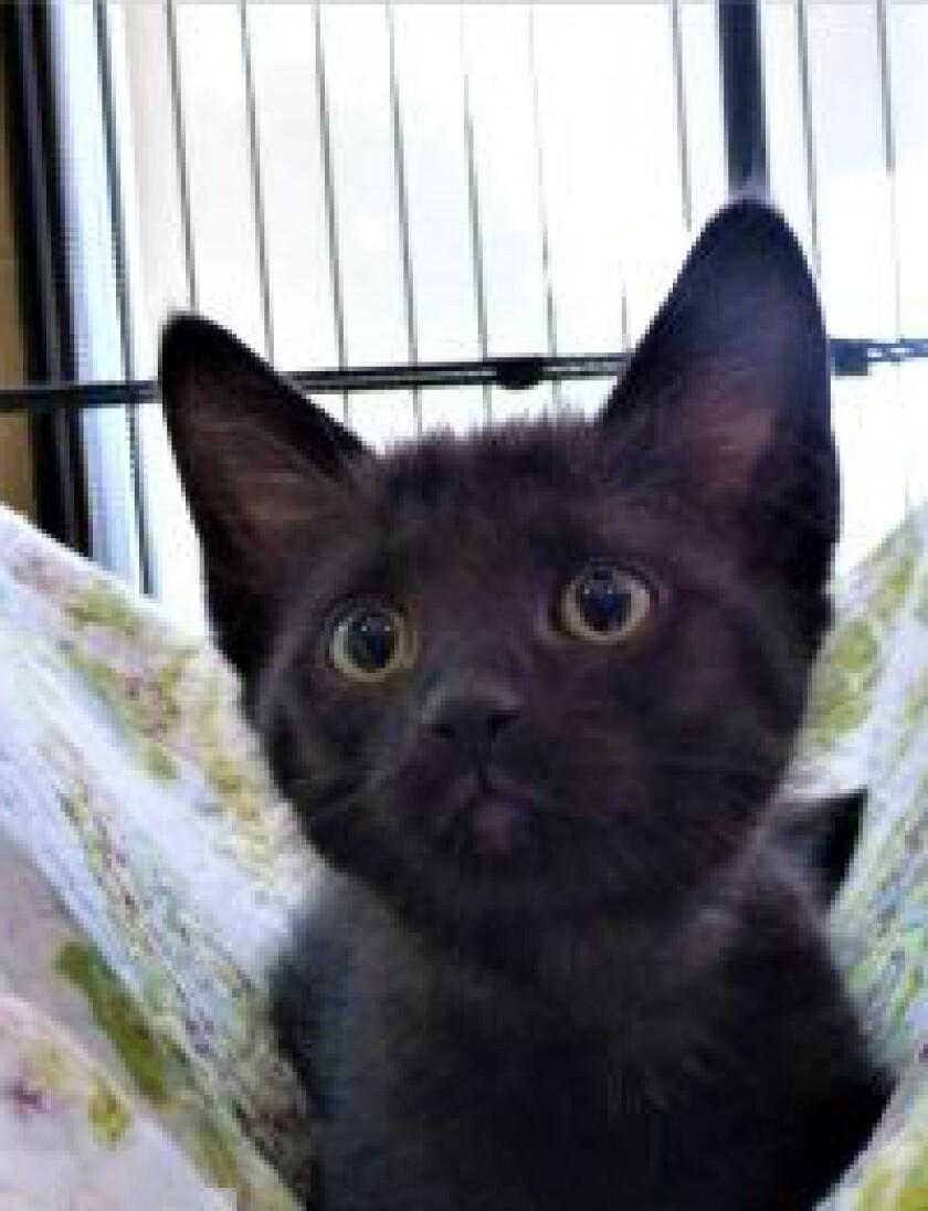 9019_pet_adoption_link.jpg