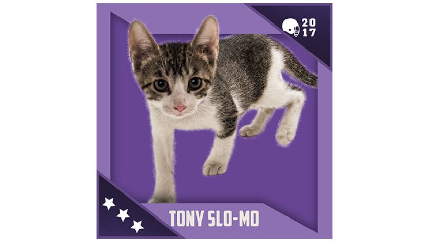 Kitten Bowl IV Emojis - North Shore Bengals - Tony Slo Mo