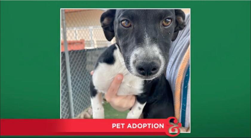 9040_Pet_Adoption_Talita.jpg