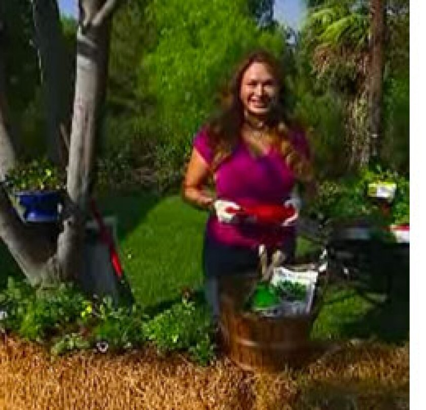 Image: http://images.crownmediadev.com/episodes/Medias/RichText/Shirley-Bovshow-segment-ep025.jpg