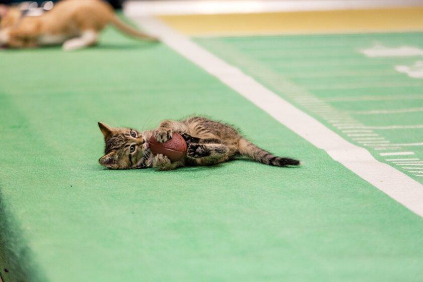 KittenBowl3_0168.jpg