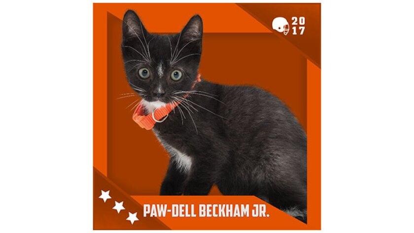 Kitten Bowl IV Emojis - Home & Family Felines - Paw Dell Beckham