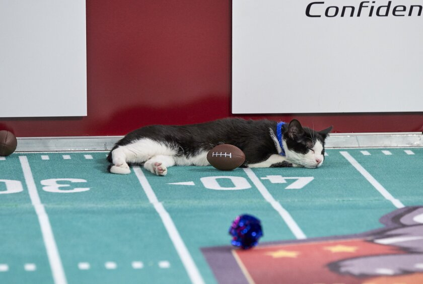 Photos from Cat Bowl - 13