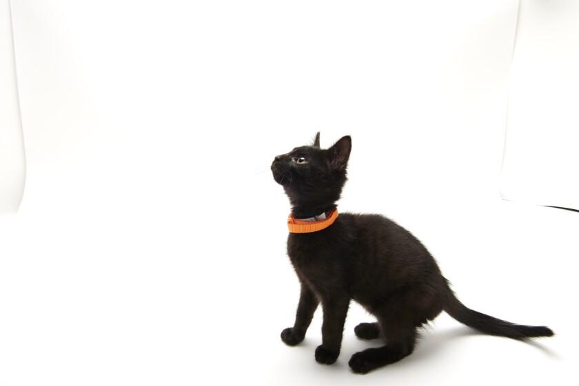 Kitten Bowl IV Photos - Home & Family Felines - 6