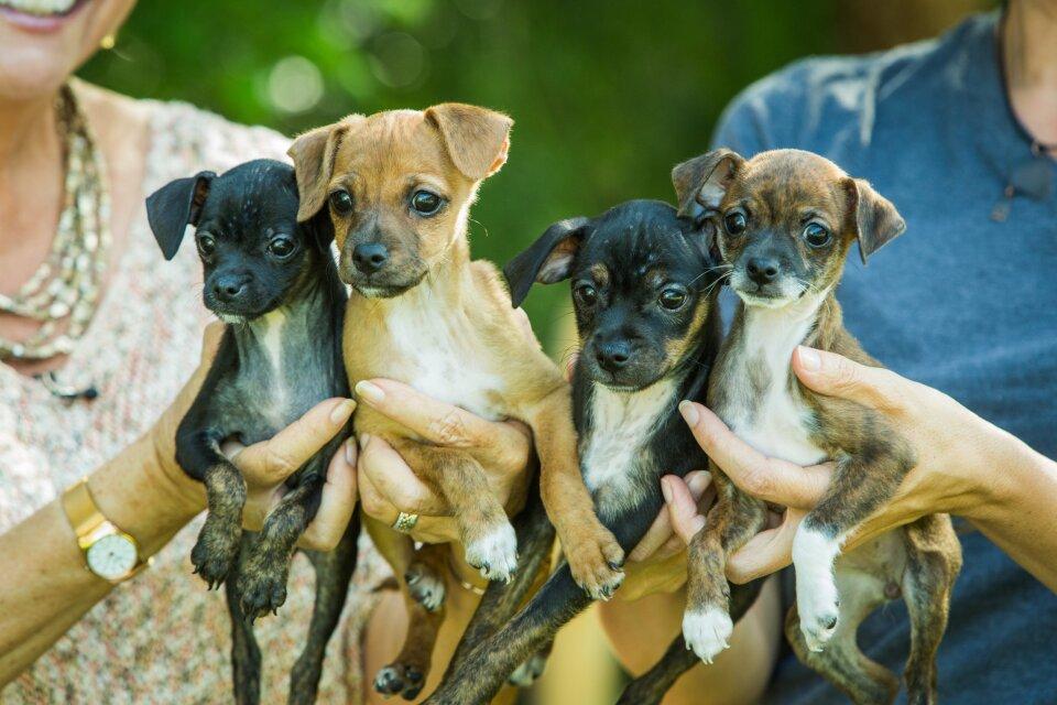 hf4020-product-puppies.jpg