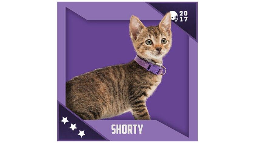 Kitten Bowl IV Emojis - North Shore Bengals - Shorty