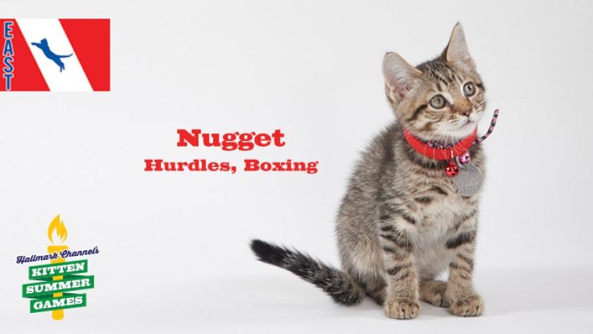 KittenSummerGames_726x410_Nugget.jpg