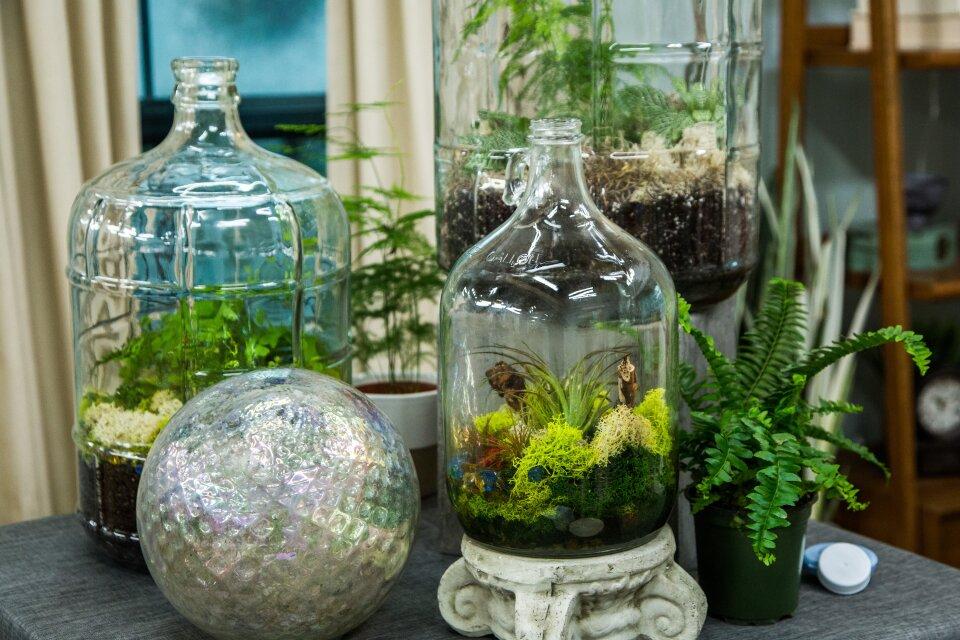DIY Sealed Bottle Garden