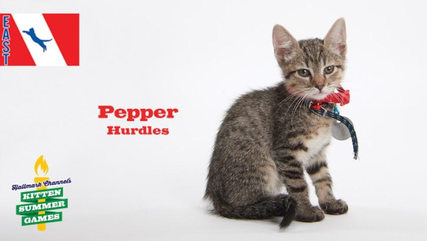 KittenSummerGames_726x410_Pepper.jpg