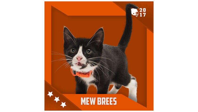 Kitten Bowl IV Emojis - Home & Family Felines - Mew Brees