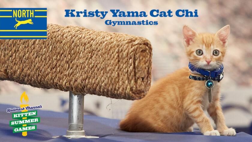 KittenSummerGames_726x410_KristyYamaCatChi.jpg