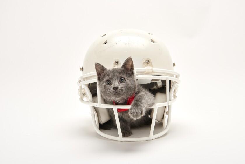 Kitten Bowl Football - 4