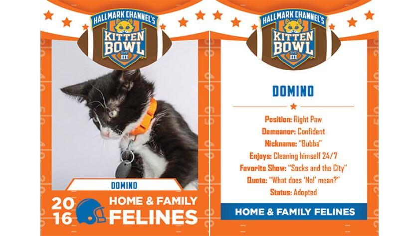 Domino-felines-KBIII.jpg