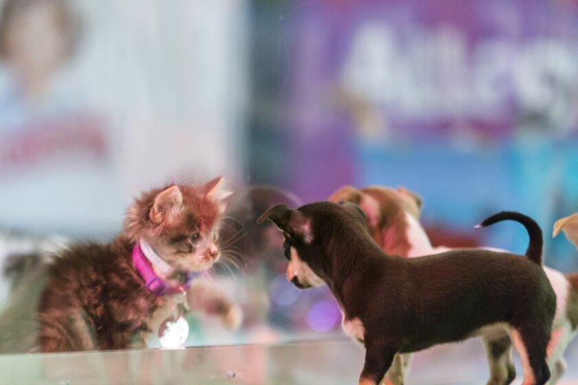 Kitten Bowl III Photo 3 - Halftime