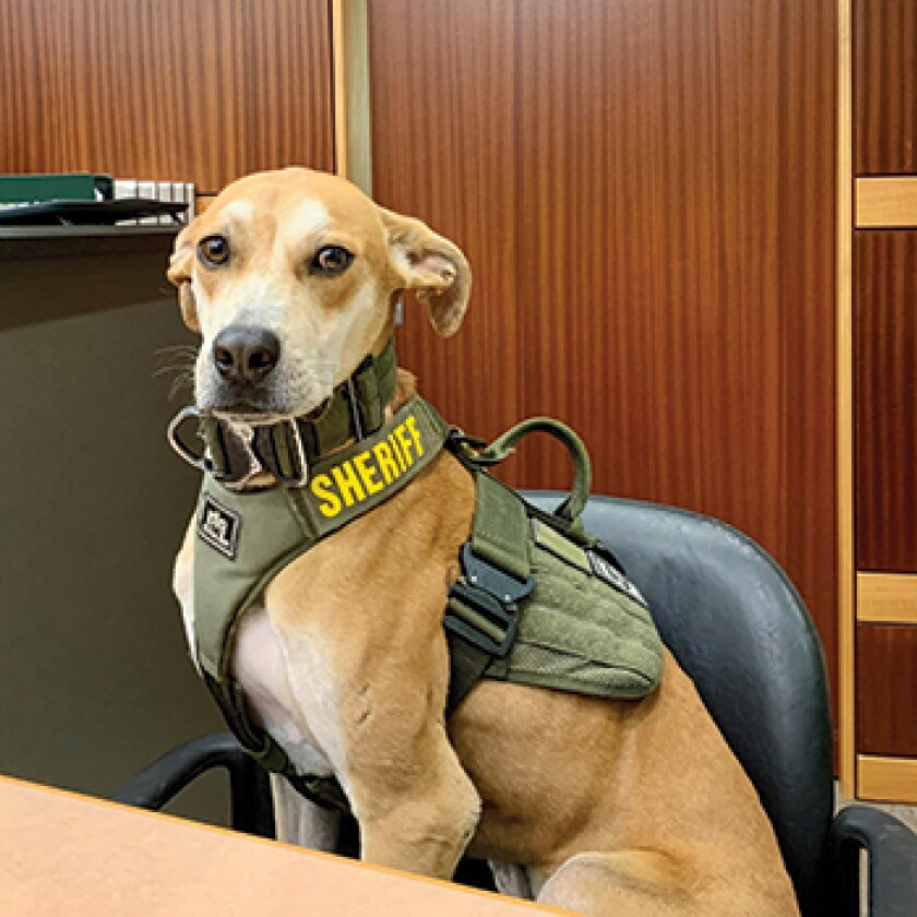 American Humane Hero Dog Awards 2021 Finalist - Deputy Chance