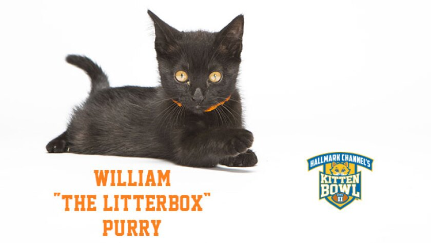 """William """"The Litterbox"""" Purry"""