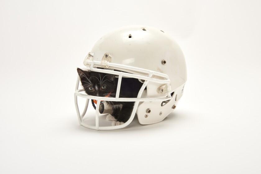 Kitten Bowl Football - 8