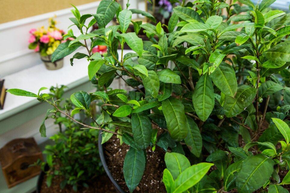 DIY Tea Garden