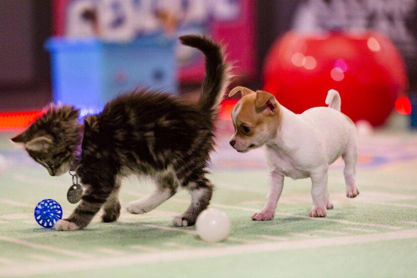 KittenBowl3_2334.jpg