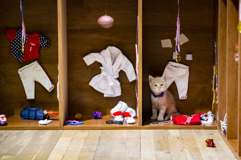 KittenBowl3_0797.jpg