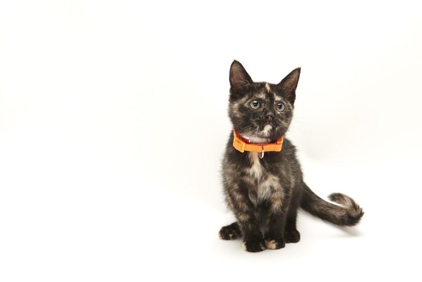 Kitten Bowl IV Photos - Home & Family Felines - 3
