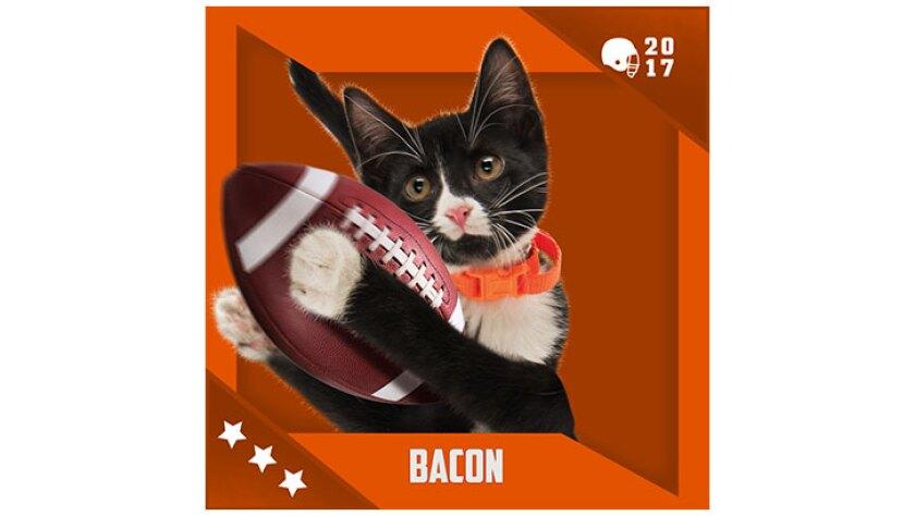 Kitten Bowl IV Emojis - Home & Family Felines - Bacon