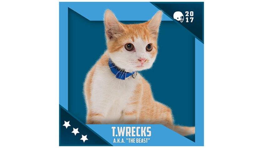 Kitten Bowl IV Emojis - North Shore Bengals - T Wrecks