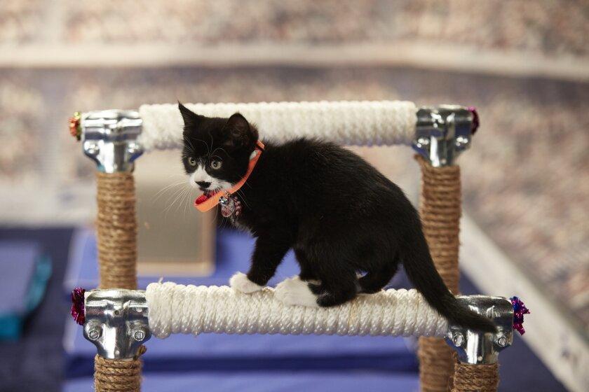 KittenSummerGames_0111.jpg