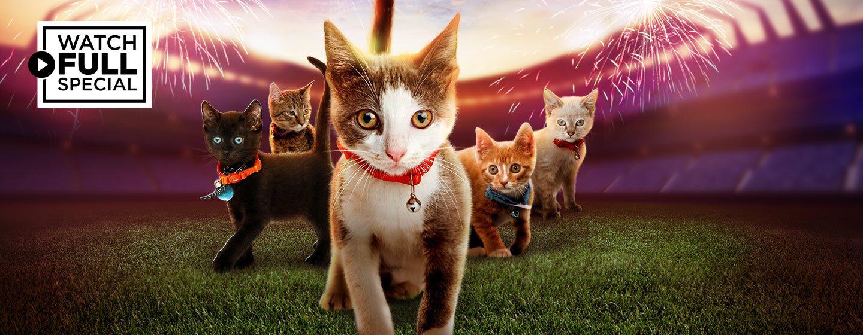 DIGI21_KittenBowlVIII_DynamicLead_1440x560_TVE.jpg