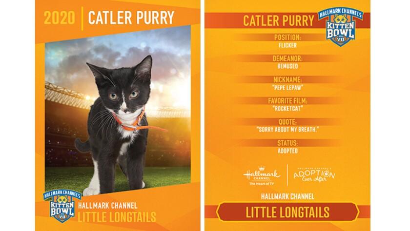 LL-Catler-Purry.jpg