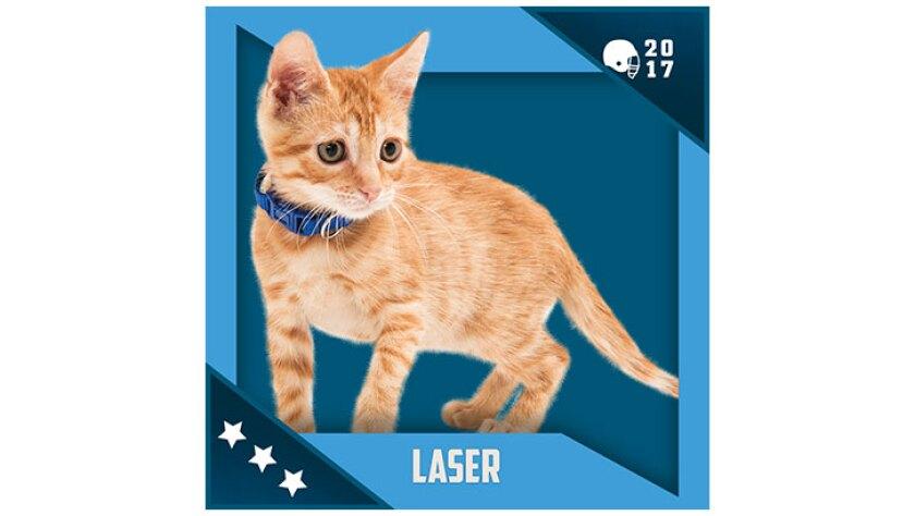 Kitten Bowl IV Emojis - North Shore Bengals - Laser