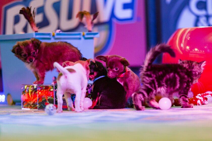 Kitten Bowl III Photo 9 - Halftime
