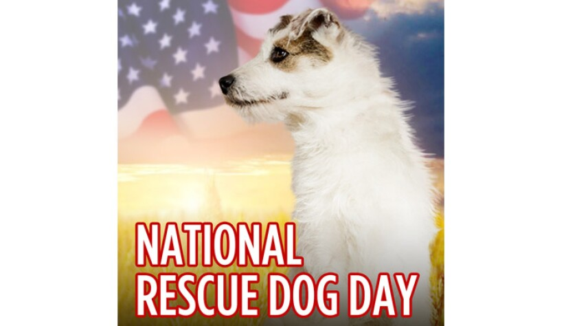 052019-national-rescue-dog-day.jpg