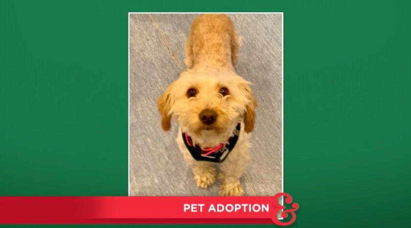 9047_pet_adoption_Spanky.jpg